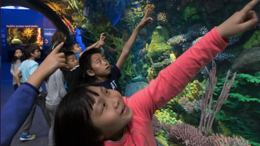 Why zoos and aquariums are beneficial