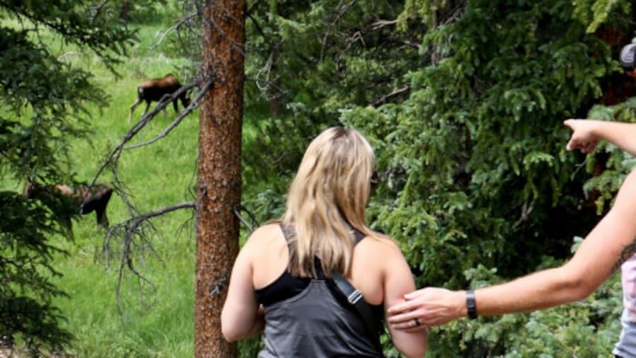 Seven ways to watch wildlife